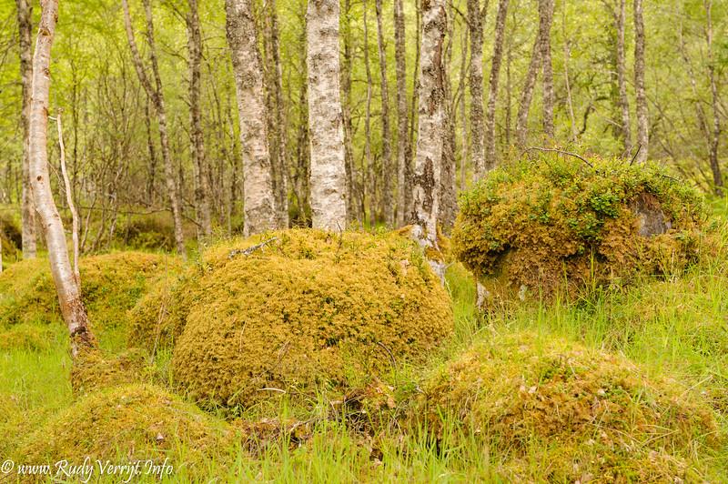 Schotland 2011 :Dornoch-Drumnadrochil