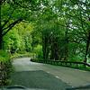 Driving  along Loch Lomond