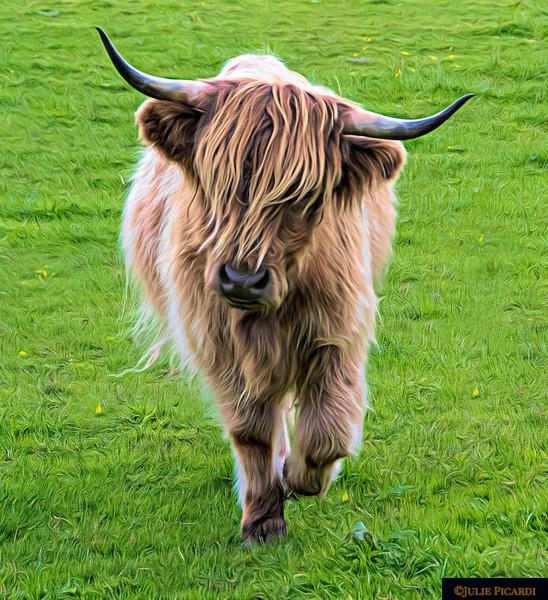 Highland Cow Full Body Portrait