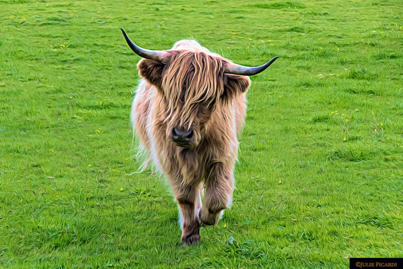 Highland Cow Full Body Landscape