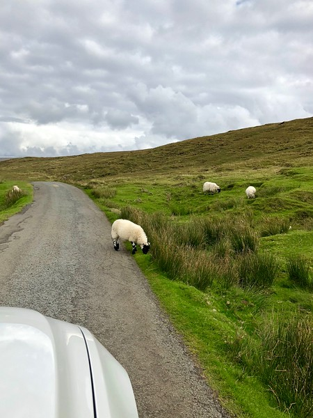 iPhone: Sheep on the road