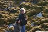 Bij Applecross - zeehonden bekijken