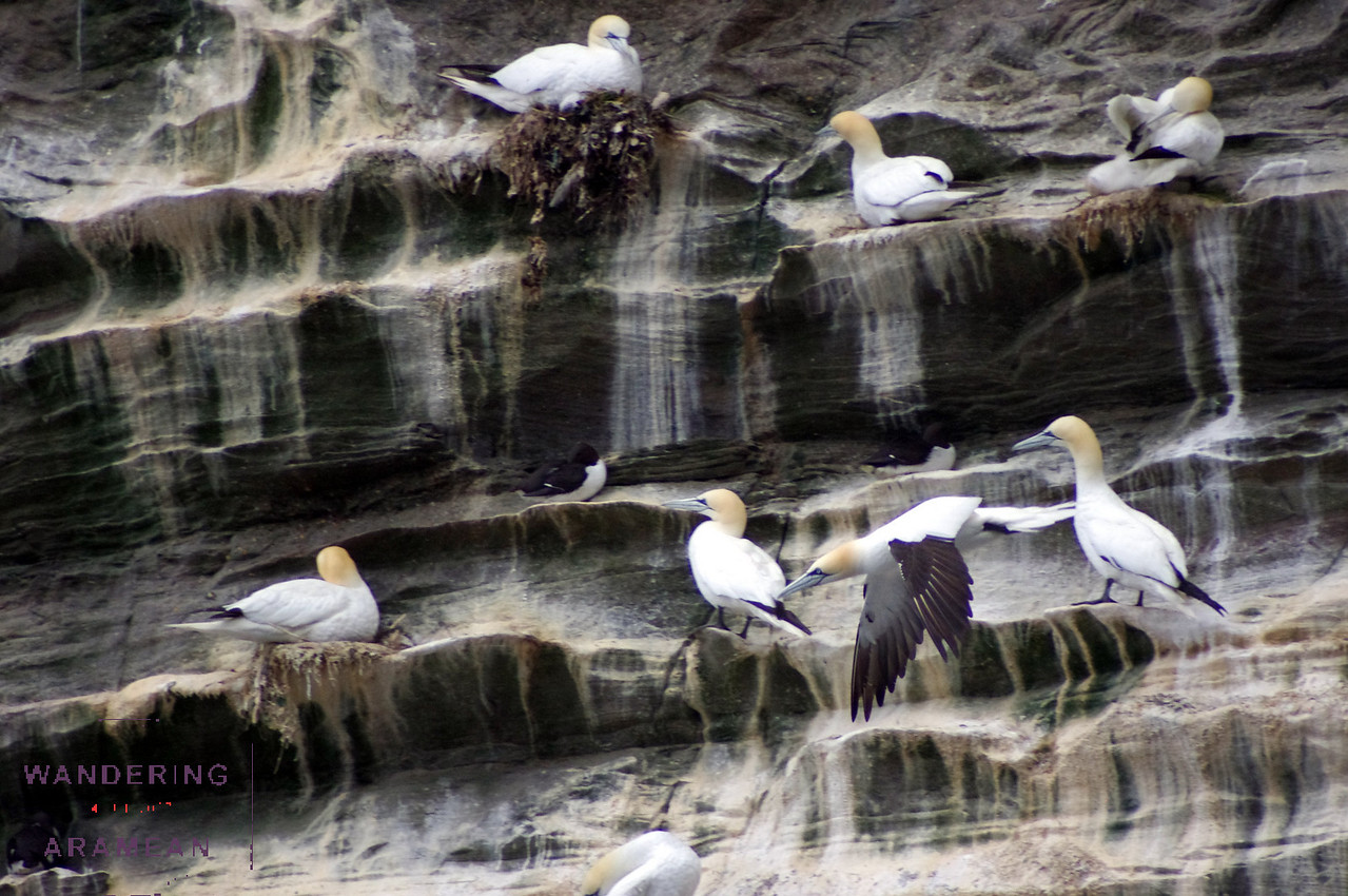 There were thousands of birds consuming every nook and cranny on the cliff faces