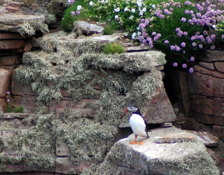 Puffin!  Very cute, I'd say.