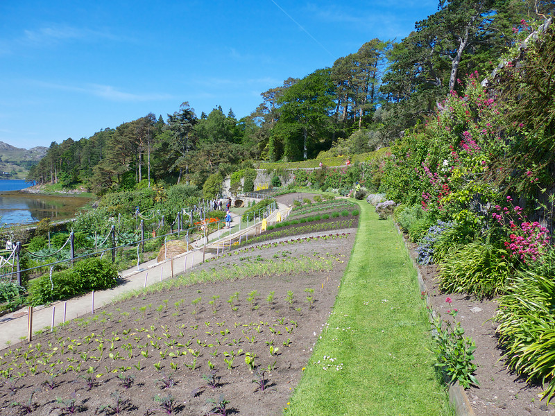 Inverewe Garden was created in 1862 on 50 acre portion of a larger estate.  It is noteworthy in a lot of respects not the least of which is that there were no trees on this peninsula when it was established.  The soil was imported from Ireland and climate is courtesy of the Gulf Stream.