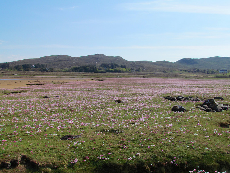 We had to cross over a sea of sea thrift