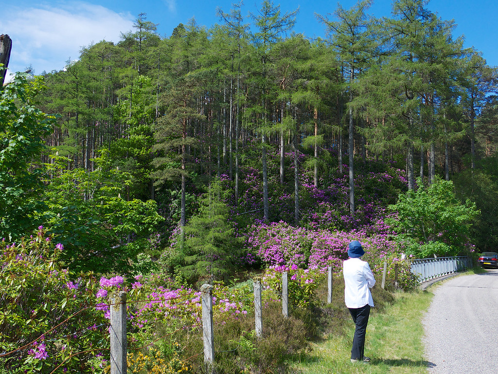 We were amazed to see the wild Rhododendron everywhere