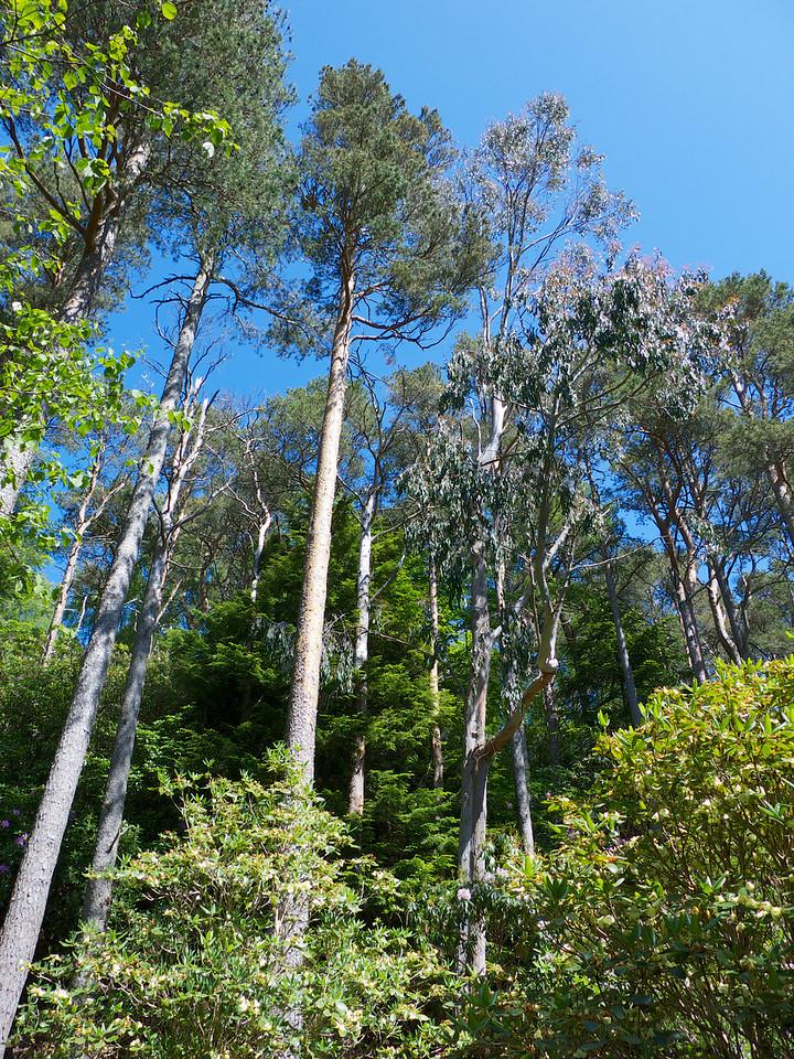 And Eucalyptus