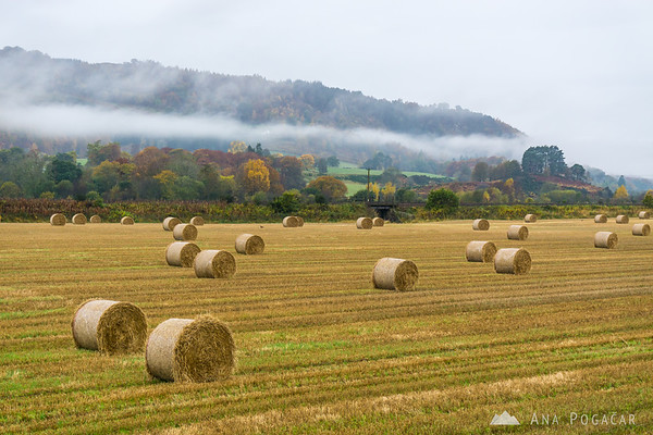 Fall colors and hay bales