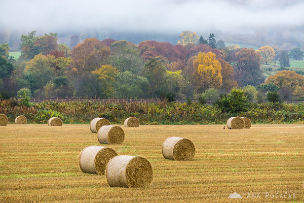 Fall colors and hay bales