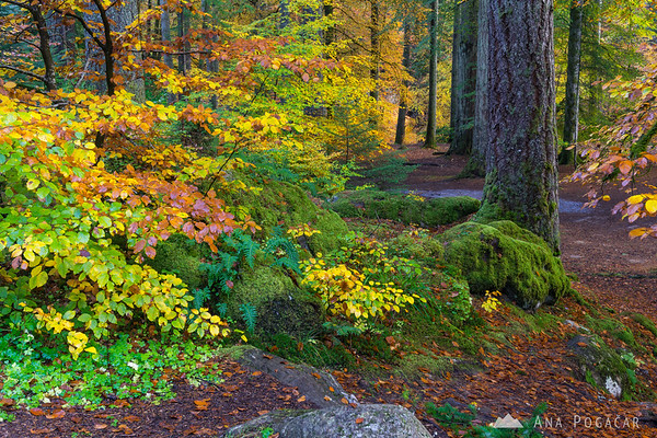 Fall colors at the Hermitage, Perthshire