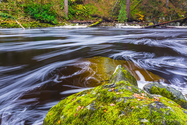 Foamy river at the Hermitage, Perthshire