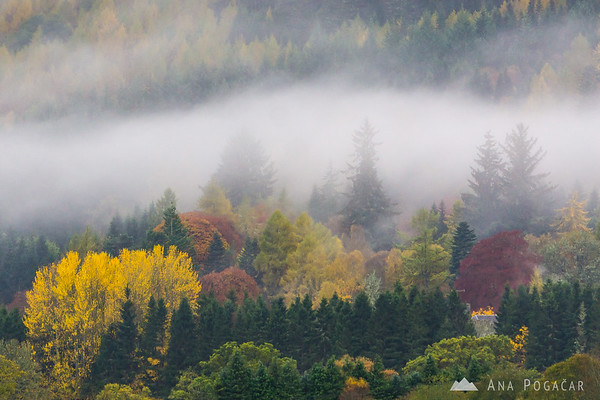 Fall colors and fog