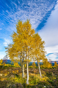 Fall in Cairngorms