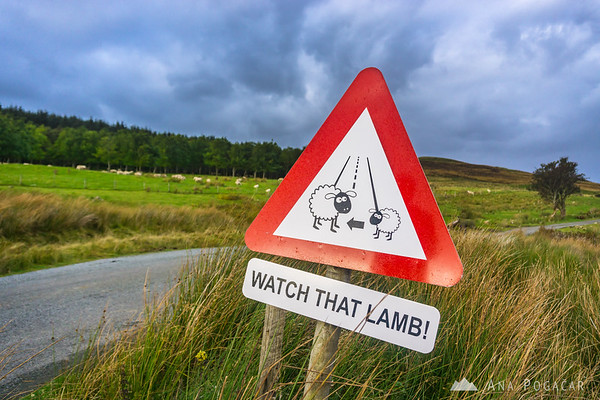 Beware of sheep sign, Isle of Skye