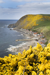 Crovie from the cliffs.