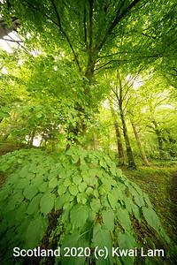 Leafy Hand