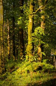 ScotlandSpring2020_KwaiLam-04133
