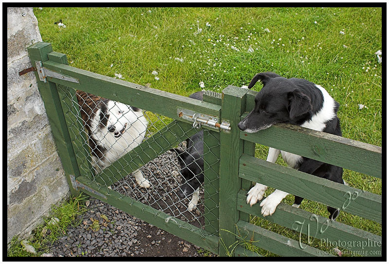 The friendly dogs at the B&B in Durness.