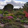 Many beautiful plantings in the Edinburgh Botanical Garden.