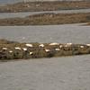 Harbor seals enjoy beach time near Dunvegan.