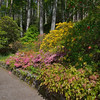 Many varieties of rhododendron plants and others grow amid the native Scots pines and other trees planted to provide protection from the corrosive salt breezes.