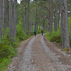 A road on the Coulin Estate through the pine forest.