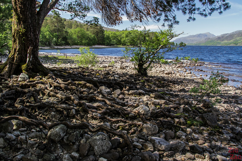 Shores of Loch Maree Scotland 1