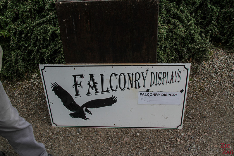 Dunrobin Castle Falconery