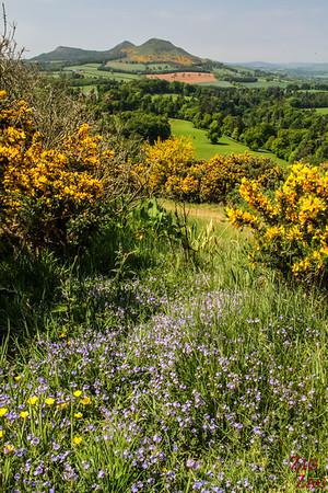 Scott's view Scotland 4