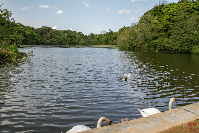 Culzean - Swan Pond 2