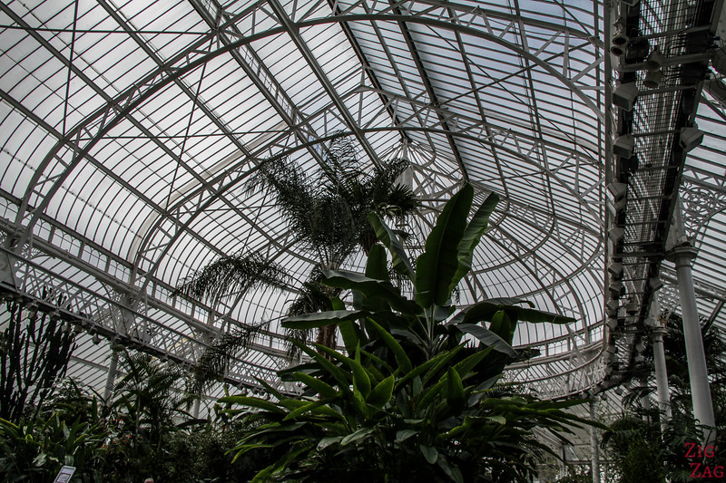 People's Palace Glasgow Winter Gardens 3
