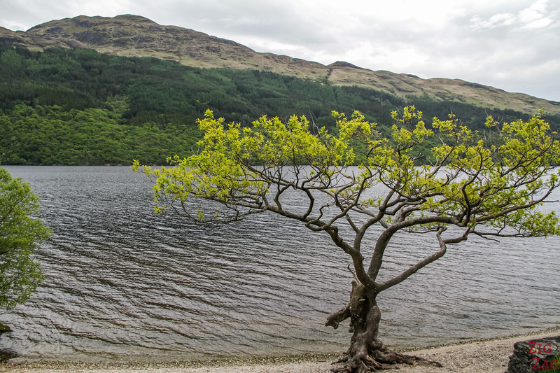 Loch Lomond Schottland - firkin point 5