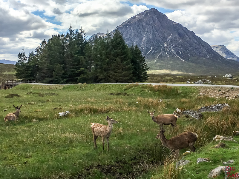 Buachaille Etive Mor - from the Kings House Hotel with red deers 4