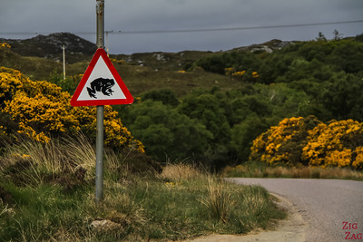 Conduire en Ecosse - dangers 3