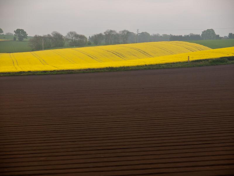 A field of flax.
