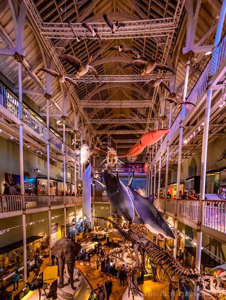 National Museum of Scotland in Edinburgh.