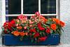 Flowers,  Dunkeld, Scotland, United Kingdom, Europe
