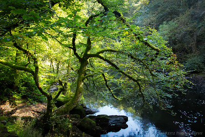 The Hermitage park in Dunkeld, Scotland.