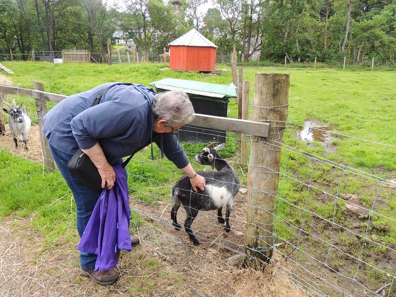 Goats Fort Agustus