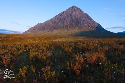 Buachaille Etive Mor and White Flowers