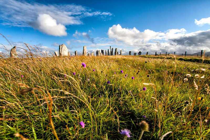Wildflowers at Callanish