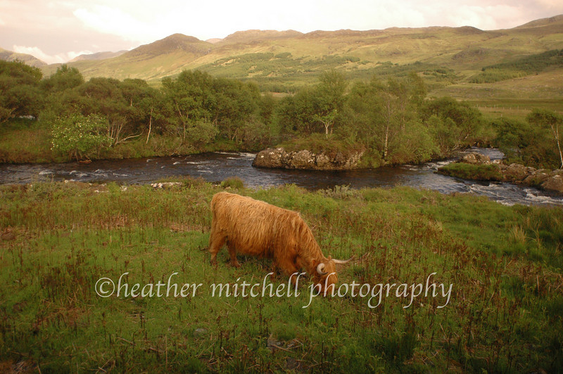 "Scottish Highlands  <form target=""paypal"" action=""https://www.paypal.com/cgi-bin/webscr"" method=""post""> <input type=""hidden"" name=""cmd"" value=""_s-xclick""> <input type=""hidden"" name=""hosted_button_id"" value=""2735482""> <table> <tr><td><input type=""hidden"" name=""on0"" value=""Sizes"">Sizes</td></tr><tr><td><select name=""os0""> 	<option value=""Matted 5x7"">Matted 5x7 $20.00 	<option value=""Matted 8x10"">Matted 8x10 $40.00 	<option value=""Matted 11x14"">Matted 11x14 $50.00 </select> </td></tr> </table> <input type=""hidden"" name=""currency_code"" value=""USD""> <input type=""image"" src=""https://www.paypal.com/en_US/i/btn/btn_cart_SM.gif"" border=""0"" name=""submit"" alt=""""> <img alt="""" border=""0"" src=""https://www.paypal.com/en_US/i/scr/pixel.gif"" width=""1"" height=""1""> </form>"