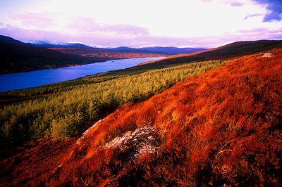 SCO-Loch Loyne,Highlands-1053