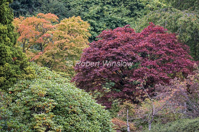 Trees, Glengarry Castle Hotel, Loch Oich, Caledonian Canal; Great Glen Way; Scottish Highlands, Scotland; United Kingdom, Europe