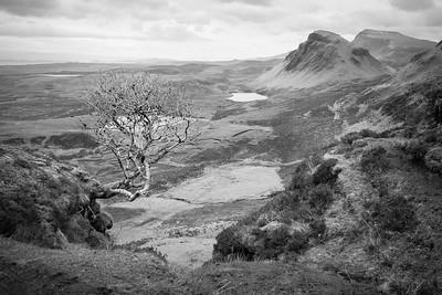 Isle of Skye, WOW a tree!!!