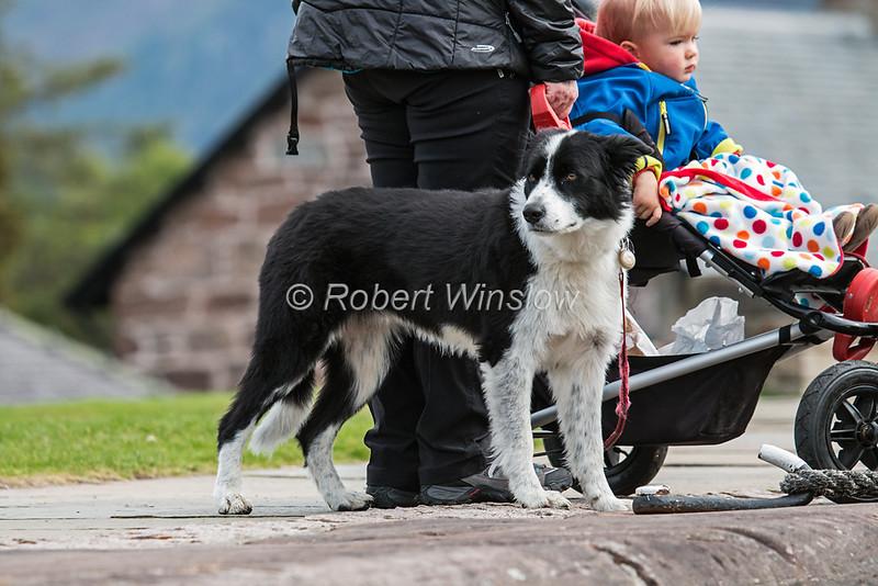 Family with Dog, Fort Augustus Locks,  Caledonian Canal; Great Glen Way; Scottish Highlands, Scotland;  United Kingdom, Europe