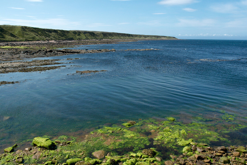 Northern northern Scotland...waiting for the ferry to go to the Orkney Islands.  The water and seaweed is so vibrant and full of life - unlike anything else I've ever seen.