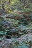 Vegetation, The Great Glen Way, Caledonian Canal; Scottish Highlands, Scotland; United Kingdom, Europe