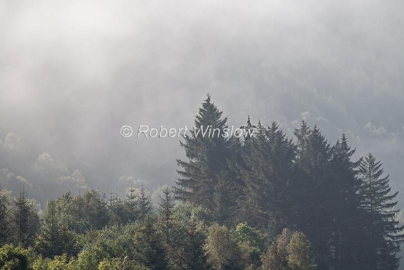 Trees, Morning, Mist,  Laggan Locks, Caledonian Canal; Great Glen Way; Scottish Highlands, Scotland; United Kingdom, Europe